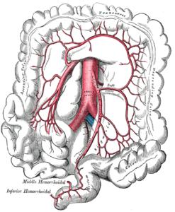 arteria mesenterica inferior